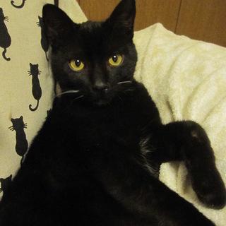 熊本っこの可愛い黒猫ぽっか君