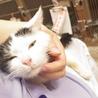 熊本地震の被災猫。たくさんの猫が助けを待っています サムネイル2