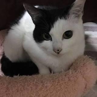 美人な白黒猫さん