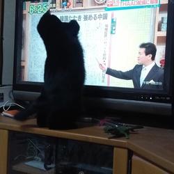 テレビッ子、あなご!