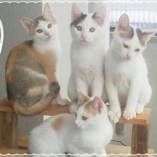 【おてんば♪】子猫4兄弟里親募集中☆