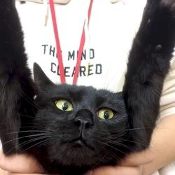 猫の譲渡会 名古屋市港区