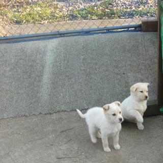 仲の良い兄弟犬ビリーとベリー!!