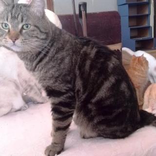 60匹の飼育崩壊現場のネコ№1