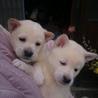 可愛い子犬2匹です