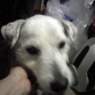 たった1人の飼い主さんが亡くなりました。