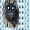 人が大好きな仲良し姉妹の子猫 サムネイル2