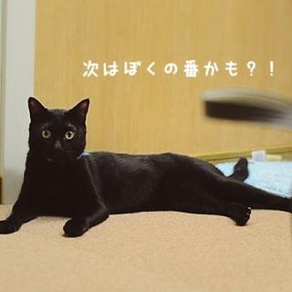 ツヤピカ黒猫<アンドルー>