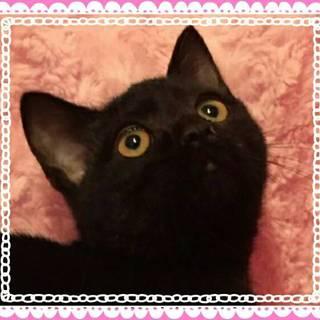 3/19【東日本橋】3ヶ月半☆黒猫の李花ちゃん