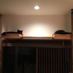 保護猫カフェ NECOT【猫神棚編】