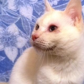 60匹の飼育崩壊現場のネコ№3