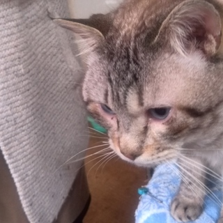 60匹の飼育崩壊現場のネコ№4