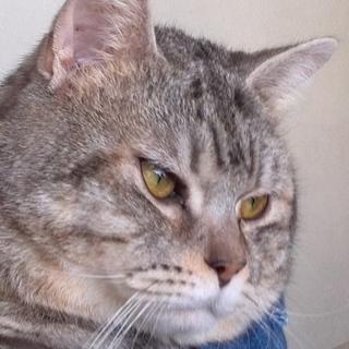 60匹の飼育崩壊現場のネコ№5