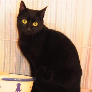 実は甘えた!美人黒猫ちゃん