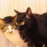 実は甘えた!美人黒猫ちゃん サムネイル3