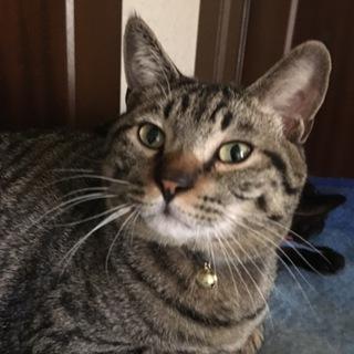 可愛いおはぎみたいな猫