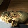 愛猫ちゃんの里親募集 サムネイル3