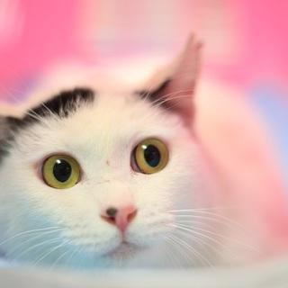 オトボケで可愛い♪性格良い猫さんです