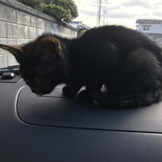 子猫ちゃん 黒 ♂3ヶ月 難あり