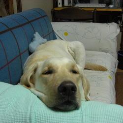 愛犬を亡くし再度飼うことについて