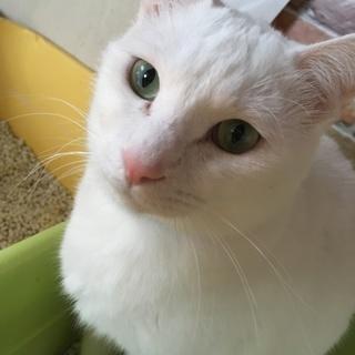 とってもハンサムな白猫くん!