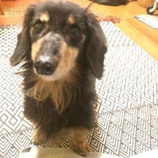 「ぬくぬく」数日ですぐに甘えん坊に♪犬も好きです。