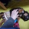 「ぬくぬく」数日ですぐに甘えん坊に♪犬も好きです。 サムネイル3
