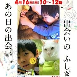 青い鳥動物愛護会☆第4回保護犬猫の譲渡会