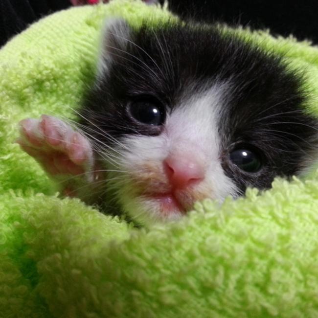 ねこてん  ~ 全ての猫は天使である ~のカバー写真