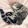 超甘えんぼのキジ猫ちゃんです!