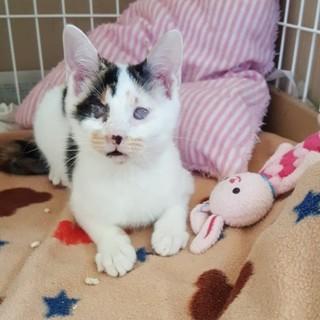 生きる為頑張ったハンデ有全盲でも性格◎の白三毛幼猫