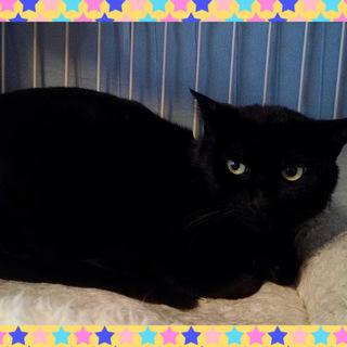 イケメン黒猫のハルヒくん