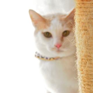 猫タレみたいな☆玉乃助くん