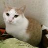 猫タレみたいな☆玉乃助くん サムネイル4