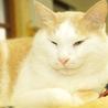 猫タレみたいな☆玉乃助くん サムネイル7