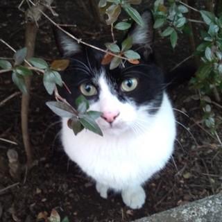 公園猫 しっかり者で心優しいミギー