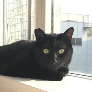 クリクリな瞳の黒猫♂かなたくん