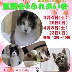 3/26(日)里親会&ふれあい会