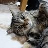 天真爛漫なオス猫 ハルくん サムネイル2