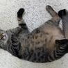 天真爛漫なオス猫 ハルくん サムネイル7