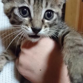 かわいい子猫ちゃん!