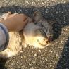 出かけた先のご近所にいた野良猫さん。外で日向ぼっこしてました