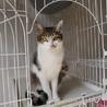 沢山の猫達がお迎えを待っております サムネイル7