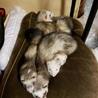 5匹勢ぞろい、その2 みんなくっついて寝るのが好き