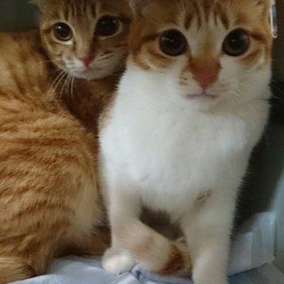 茶トラ茶白姉妹とてもキュートな二匹です