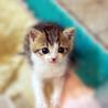 Cats'チャリティ播磨(保護活動者)