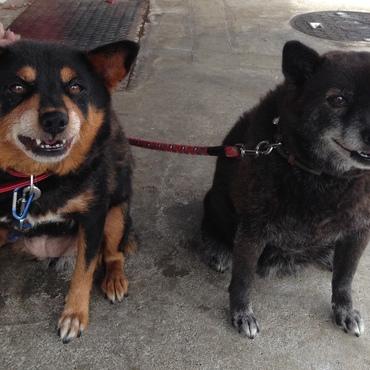 ムー(左:娘) クロ(右:母)