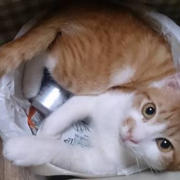 ゴミをまとめようとテーブルクロスの下からゴミ箱を引っ張りだしたら…。