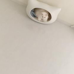 猫ニャンズの定位置