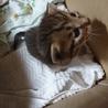 産まれて間もない子猫飼いませんか?(´;ω;`)